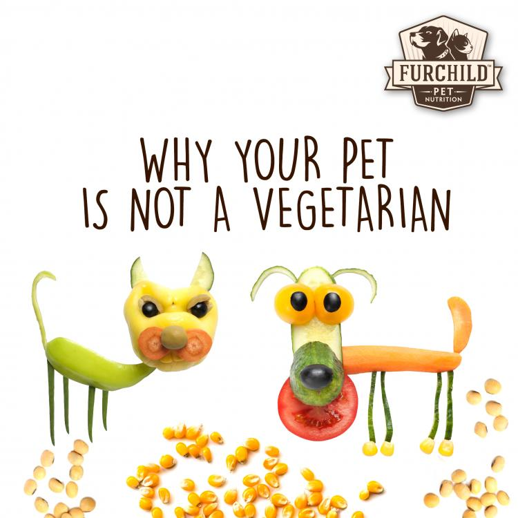 Why Your Pet is Not a Vegetarian