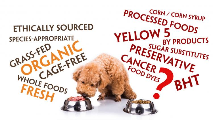 Dog Food Ingredients to AVOID!