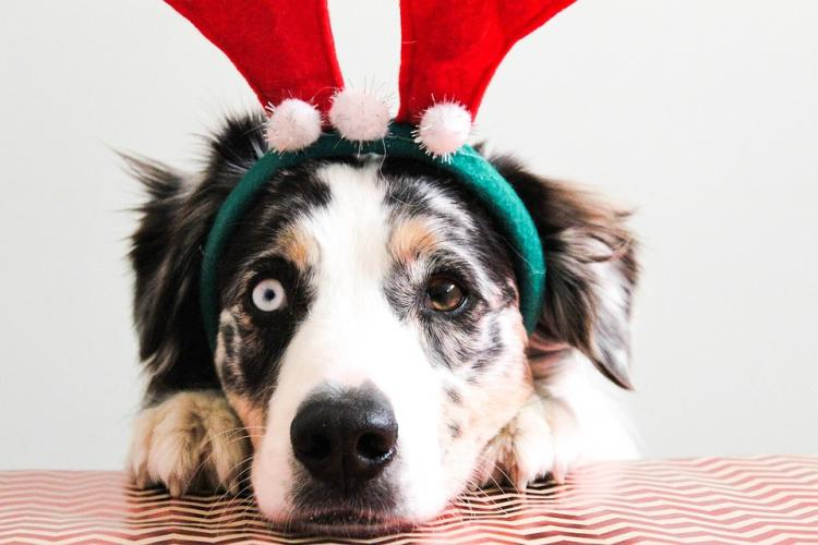 Holiday Gifts For Furchildren