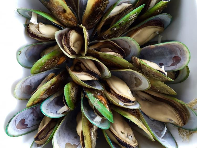 Green Lipped Mussels - A 'Superfood' for Pets