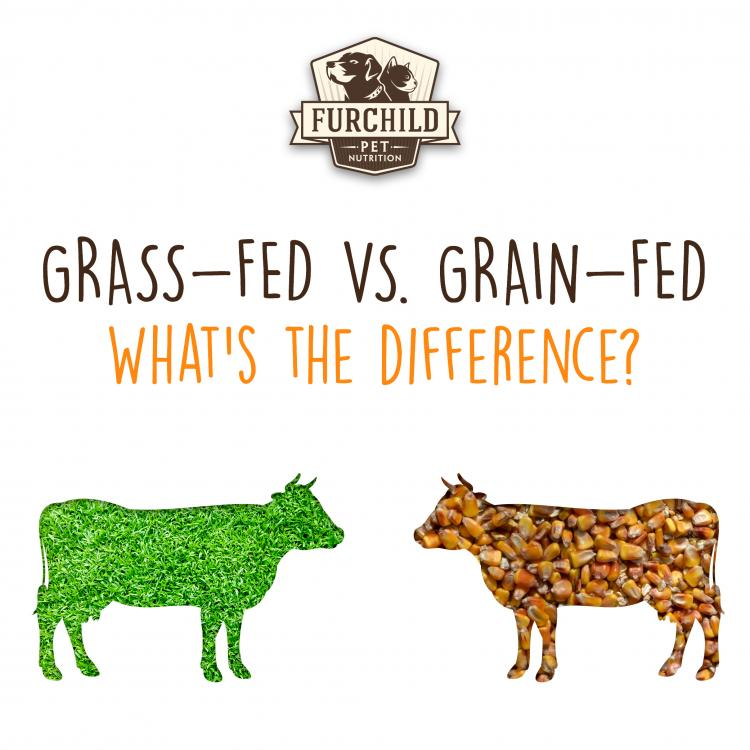 Grass-Fed Vs. Grain-Fed Beef. What's the Difference?