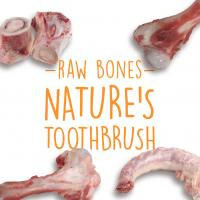 Raw Bones Are Nature's Toothbrush
