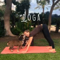 Yogafest is coming! Join us for DOGA (doggie-yoga)