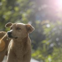 Can Your Dog Sunburn? How to Naturally Protect Your Pup from the Sun