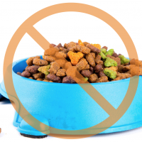 What is the Best Material for Pet Bowls?