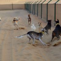 Bark Park – A Place to Run Free!