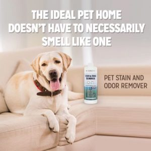 promo-furchild-pet-stain-and-odor-removal