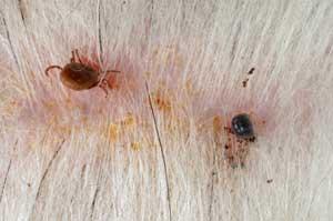 tick-effects