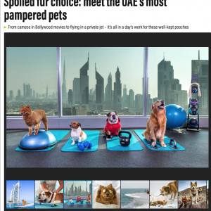 Spoiled fur choice: meet the UAE's most pampered pets